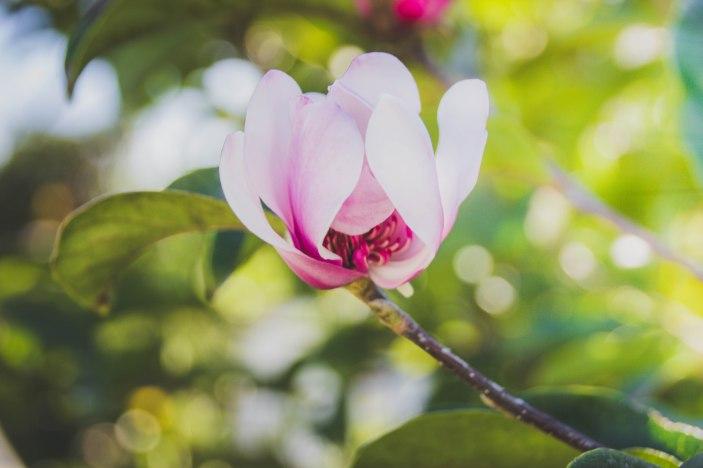 flowerseries-3