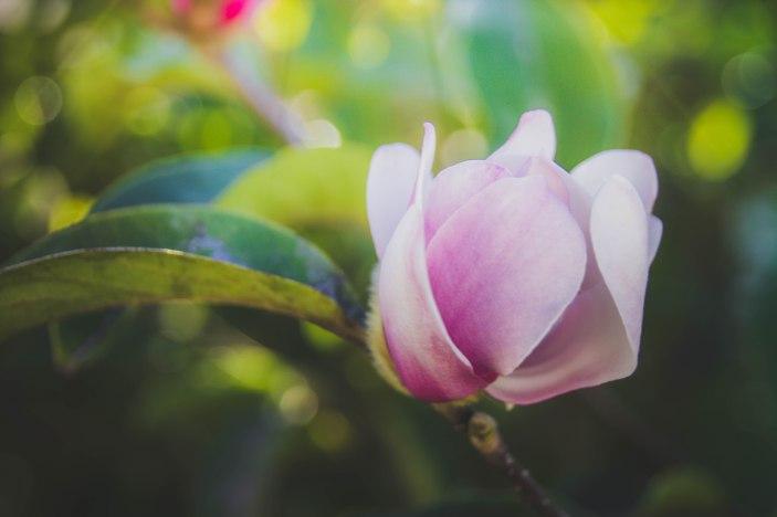 flowerseries-4