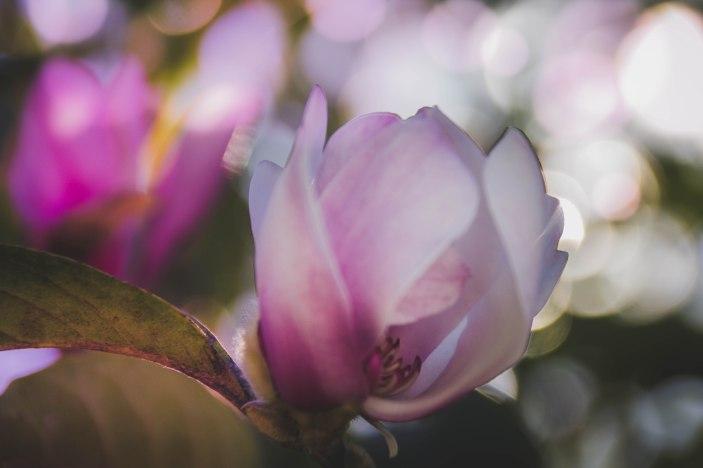 flowerseries-5