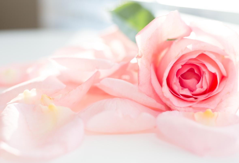 petals-6
